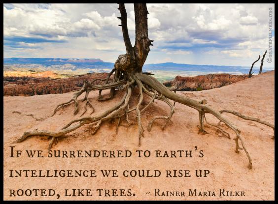 Roots-eCard